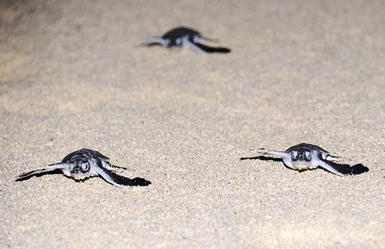 160825ウミガメ保護ボランティア清掃1